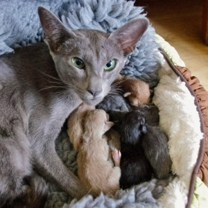 Lola and her kittens